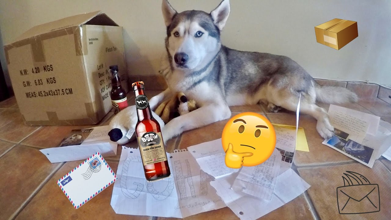 SOMEONE SENT US DOG BEER! - First Fan Mail Ever! - (Q&A?!)
