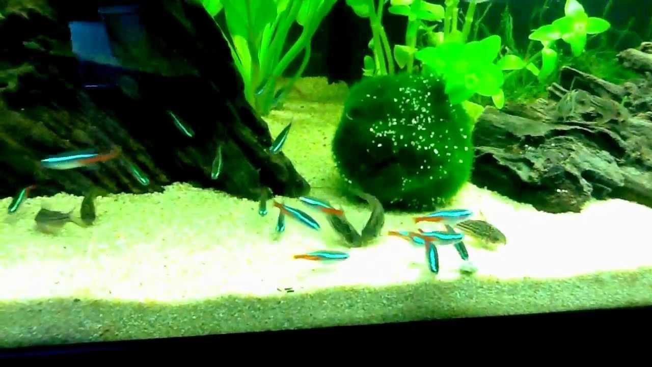 aquarium amazonien 100l