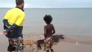 Crocodile shot by rangers