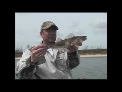 Tennessee River Sauger