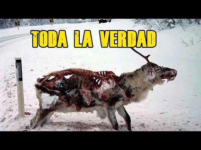 El caso de los Ciervos Zombies que están atacando EEUU
