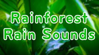 Rainforest Rain Sounds for Relaxation | Sleep or Study | 10 Hours White Noise