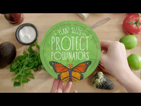 Guacamole Without Pollinators l Protect Pollinators   Whole Foods Market
