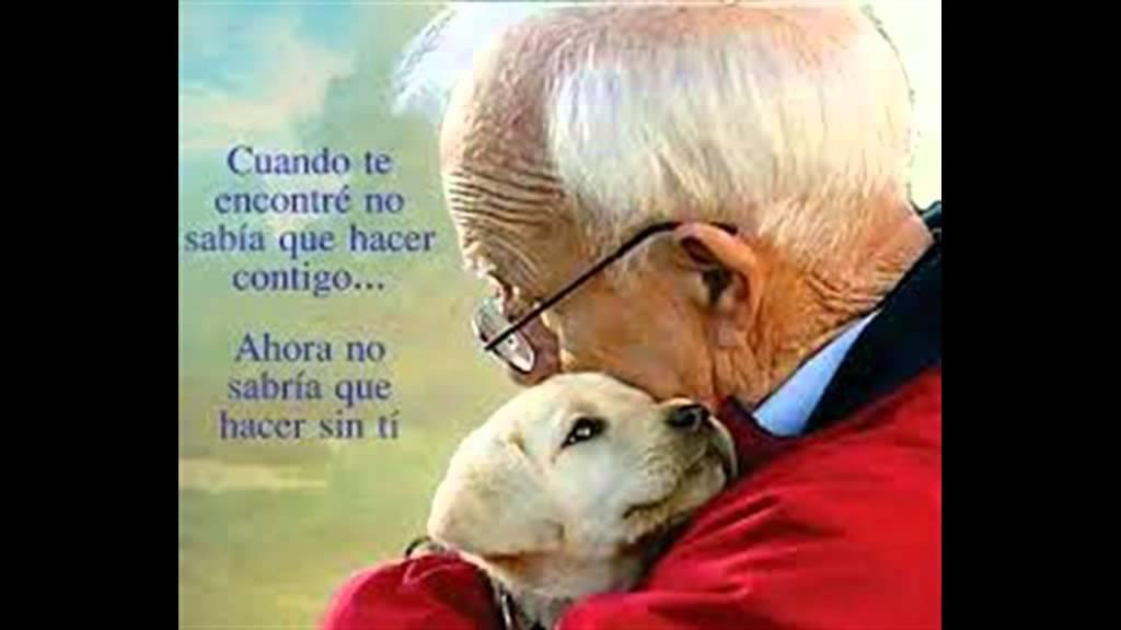 Mi Momento De Partir Carta De Un Perro Andrea Guevara