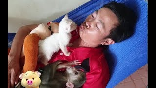 Baby Monkey | Cute Doo And Funny Cat Miu Love Daddy The Most