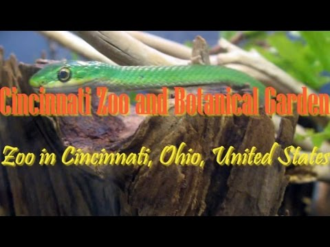 Visiting Cincinnati Zoo And Botanical Garden, Zoo In Cincinnati, Ohio, United States