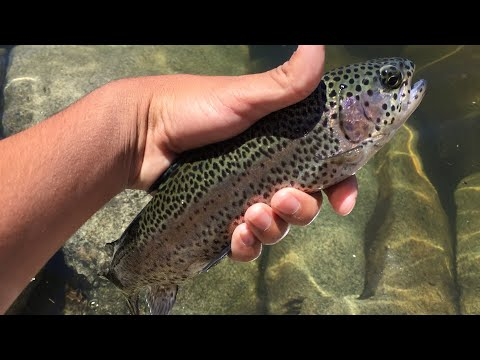 Rock Creek Lake Fishing Trip