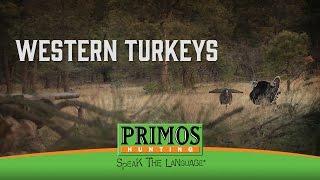 Western Turkeys