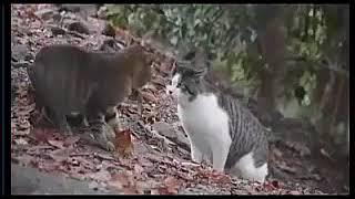 Kolpacino Dublaj Videoları YouTube