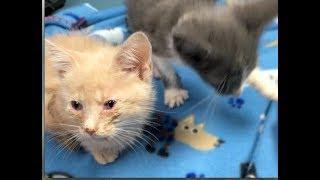 Kittens Vet Appointment for Upper Respiratory - #16 - What's In My Kitten Diaper Bag