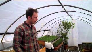 11 Ways to Regulate the Temperature in the Greenhouse