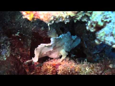 Festival image sous marine - Poissons et requins de Mayotte
