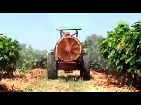 Farmagro S.A. Jacto Arbus 400 Golden cultivo Cacao