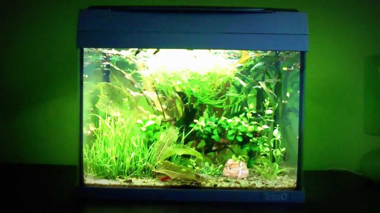 Tetra nano aquarium 20l youtube for Aquarium boule 20 litres