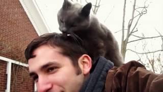 Коты любят своих хозяев