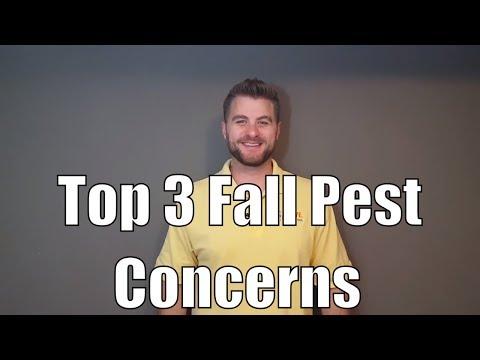 Top 3 Fall Pest Concerns
