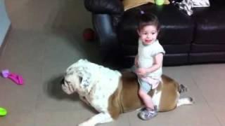 Hili & Boss 2(English bulldog and a baby)