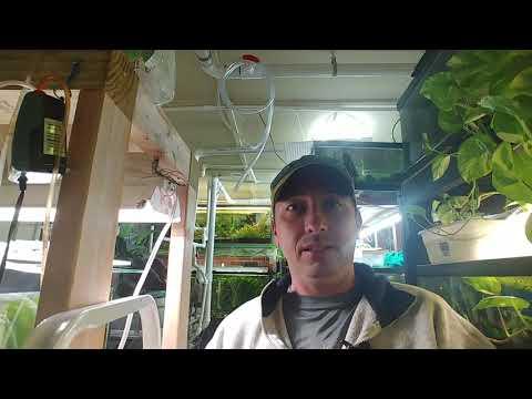 Rain Water For Your Aquariums / Tanks