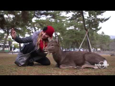 Japan Revealed: Sights & Activities - Lonely Planet travel videos