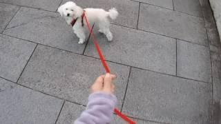 犬の首や気管に負担のかからないハーネス(胴輪)が奨励されるようにな...