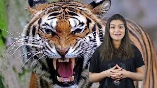10 Tiere, die deren Besitzer umbrachten