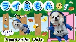 【ポメラニアン ライト】ドラえもんに変身★手作り服 二足歩行 かわいいコスプレ【Dog】Pomeranian transformed into Doraemon is too cute★clothes thumbnail