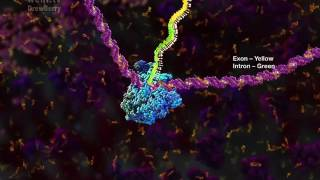 mRNA processing and the Spliceosome