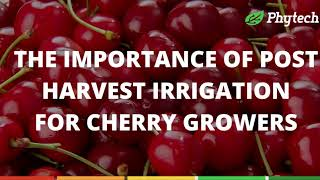 Phytech post harvest irrigation optimization in cherry trees washington
