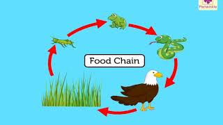 Food Chain For Kids | Periwinkle
