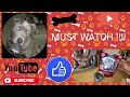 The Best dog food for your puppy pitbull / dog breed (Must Watch) Eating her Blue Dog Food Challenge