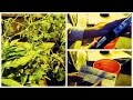 Quick Vlog: How to Add Nutrients to Water your Plants | GrowAce Update
