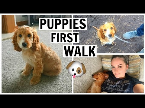 PUPPIES FIRST WALK OUTSIDE! (12 Week Old Cockapoo)