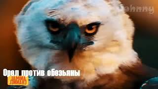 ОРЁЛ В ДЕЛЕ! 15 Жутких нападений орлов снятых на камеру
