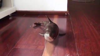 Curso - Tubarão - Vídeo Resultado