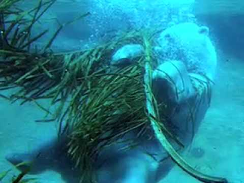 Ode to Audra - By: Underwater Basket Weavers - YouTube