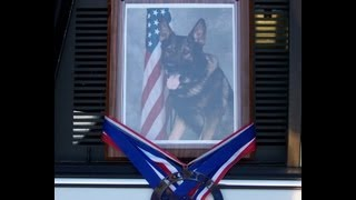 """K9 """"Highway"""" Honored with Tree Dedication Ceremony"""