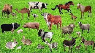 Домашние животные и их детёныши. Название животных.