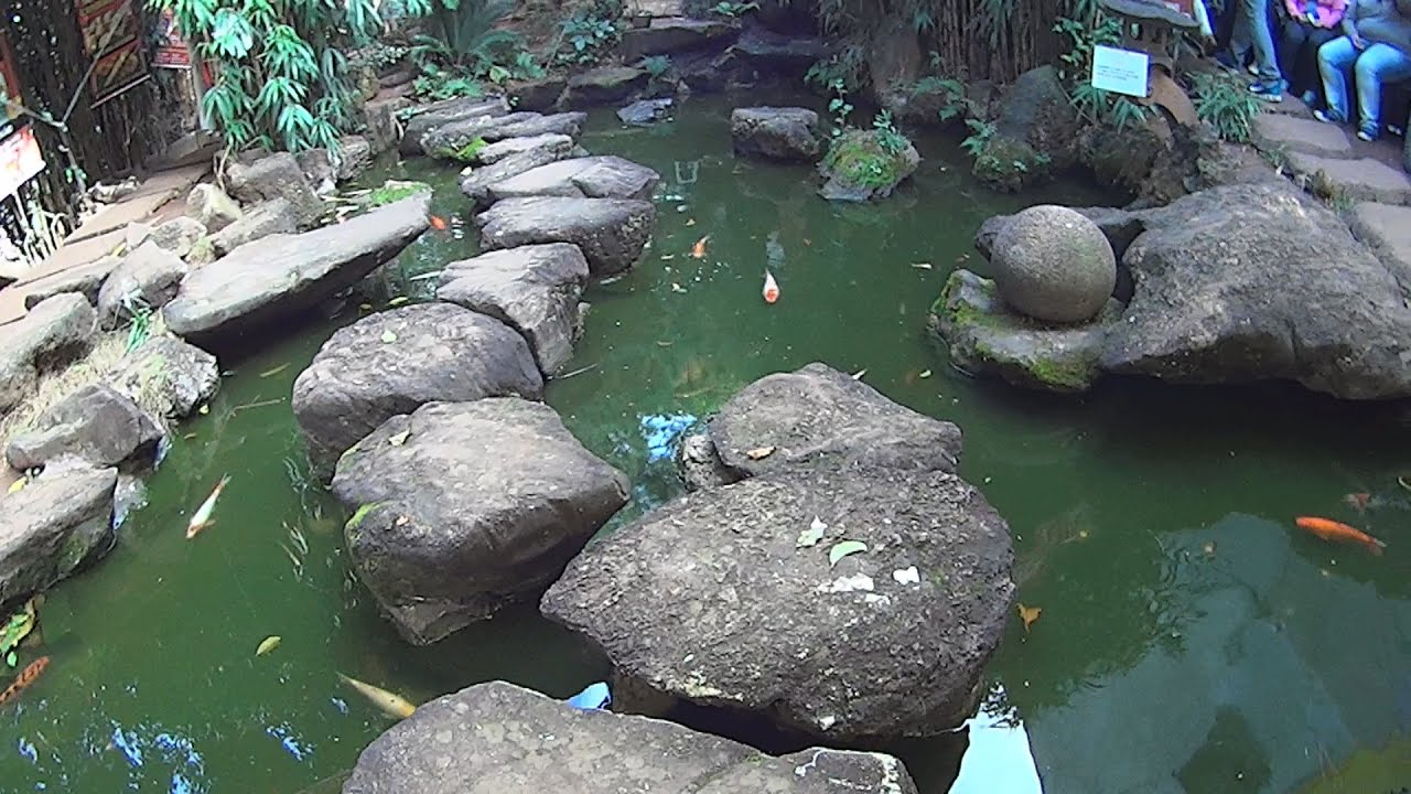 Garden pond fountain and ornamental fishes in brazil youtube for Ornamental fish garden ponds