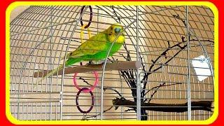 Один в клетке//Съемка скрытой камерой//Чем занят попугай