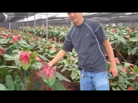 Green Point Nursery Greenhouse Tour Part One