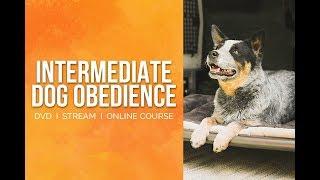 Intermediate Dog Obedience - PROMO