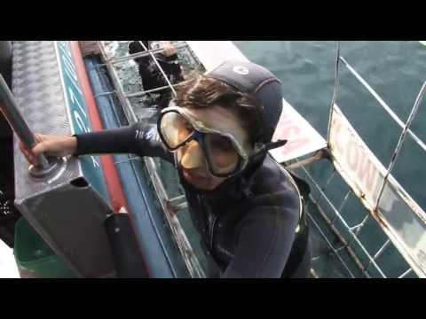 Cape Town Penguins Great White Shark Diving