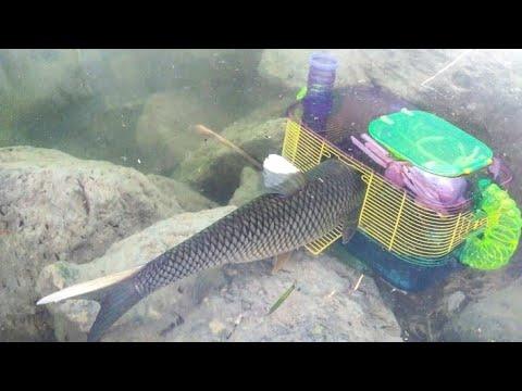 HAMSTER CAGE FISH TRAP Catches BIG FISH! DIY Fishing