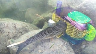 hamster-cage-fish-trap-catches-big-fish-diy-fishing