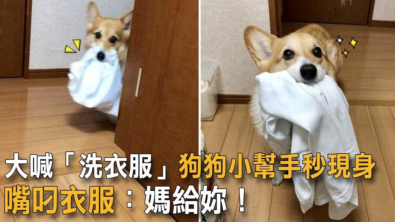 大喊「洗衣服」狗狗小幫手秒現身 嘴叼衣服:媽給妳!|狗狗故事|小幫手