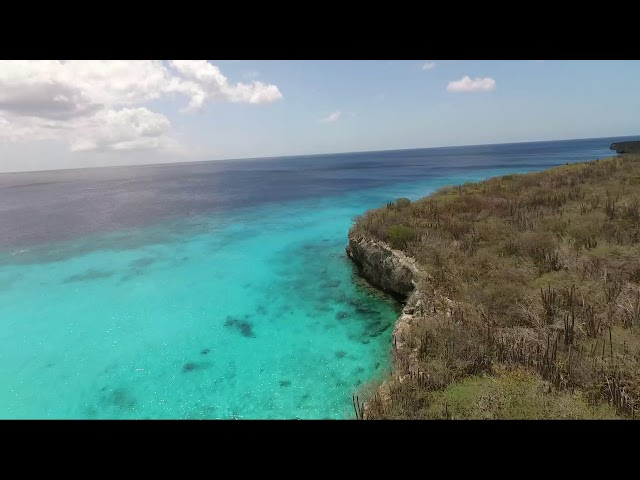 Curacao Dreams Travel - Sea turtle & Beach Tour