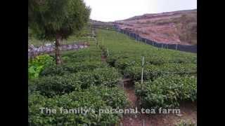 Taiwan Tea Adventure