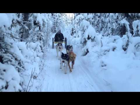 New Adaptive Dog Mushing Equipment