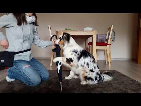 Tutorial Hundetrick: Etwas mit der Pfote halten