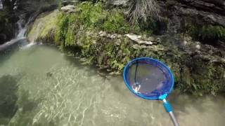 Exploring a Creek to Catch Craw Fish with a Net